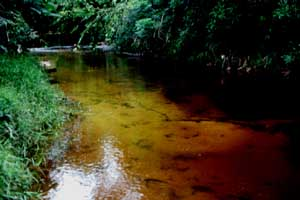 Sungai Merah, the Red River